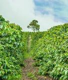 咖啡种植园Jerico,哥伦比亚 免版税图库摄影