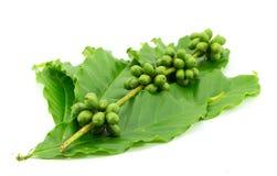 咖啡豆和叶子在白色背景 免版税库存图片