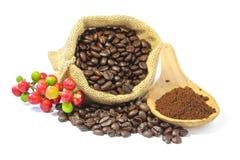 咖啡豆和和咖啡粉末 库存图片
