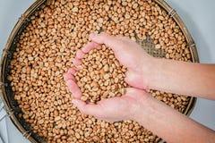 咖啡豆在手中和阿拉伯咖啡在竹篮子的咖啡豆各式各样处理的 免版税库存图片