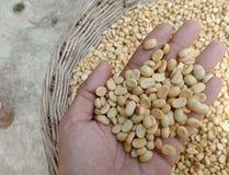 咖啡豆在手边 免版税库存照片