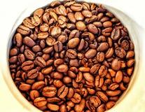 咖啡豆特写镜头在白色杯背景中 免版税图库摄影