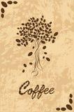 从咖啡豆的树 免版税图库摄影