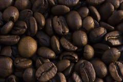 咖啡豆纹理 免版税库存图片