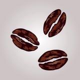 咖啡豆象 向量 免版税库存照片