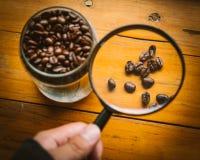 咖啡豆选择,举行放大镜看的人手 免版税图库摄影