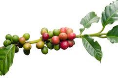咖啡豆 免版税图库摄影