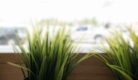 咖啡馆装饰样式:在木花盆的草在餐馆 库存照片