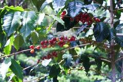 咖啡,是的咖啡,是的咖啡 免版税库存图片