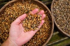 咖啡luwak豆背景  免版税库存照片