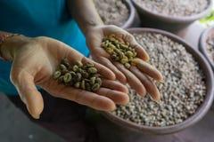 咖啡luwak豆背景  库存图片