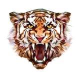 咧嘴在白色背景的老虎面孔被绘的画象  皇族释放例证