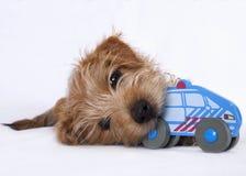咬住在小孩子的玩具的小狗 库存图片