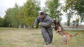 咬住在肩膀保护衣服的一条训练的德国牧羊犬狗人 免版税图库摄影