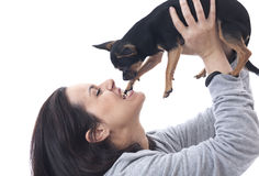 咬住她的在白色背景的妇女奇瓦瓦狗 免版税库存照片