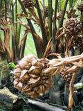 咬棕榈背景 免版税库存照片