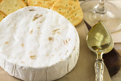 咸味干乳酪乳酪 免版税库存照片