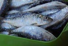 咸沙丁鱼 库存图片