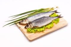 咸的鲱鱼 图库摄影