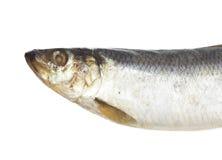 咸顶头的鲱鱼 免版税图库摄影