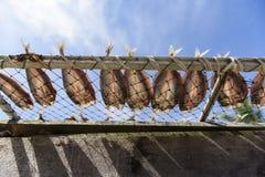 咸鱼,干饵料在泰国市场上 库存图片