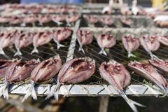 咸鱼,干饵料在泰国市场上 库存照片