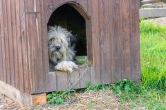 哀伤和友好的狗 库存图片