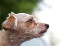 哀伤和孤独的狗 免版税库存图片
