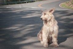 哀伤和无家可归的狗 免版税库存照片