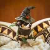 哀伤地坐和戴巫婆的帽子的一只很少小狗 免版税库存照片