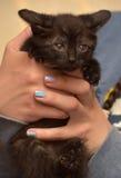 哀伤的不快乐的小猫 图库摄影
