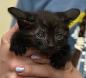 哀伤的不快乐的小猫 免版税库存照片