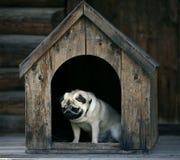哀伤的哈巴狗狗在犬小屋里 免版税库存图片