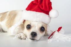 哀伤的圣诞老人 库存照片