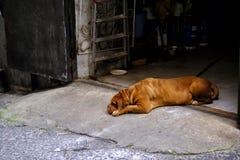 哀伤的大狗某处在街道 库存照片