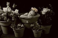 哀伤的女花童 免版税图库摄影