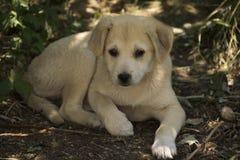 哀伤的孤独的小狗 图库摄影
