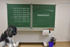 哀伤的小犬座有拘留在学校 免版税库存图片