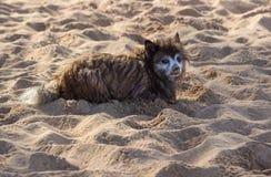 哀伤的小狗或小狗在沙滩 图库摄影