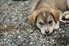 哀伤的小狗 免版税库存图片