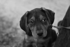 哀伤的小狗 免版税图库摄影
