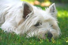 哀伤的小狗 免版税库存照片