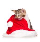 哀伤的小猫 免版税库存图片