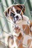 哀伤的小的小狗 库存图片