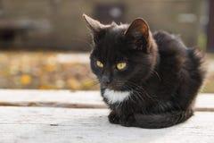 哀伤的小的猫在秋天 库存图片