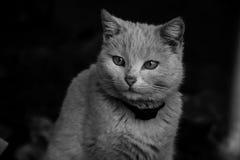 哀伤的无家可归的猫 一只空白猫的纵向 免版税库存图片