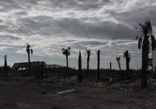 哀伤的棕榈 库存图片