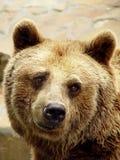 哀伤的熊 库存图片