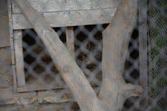 哀伤的狐狸在动物园里 免版税图库摄影