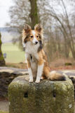 哀伤的狗坐石头 库存照片